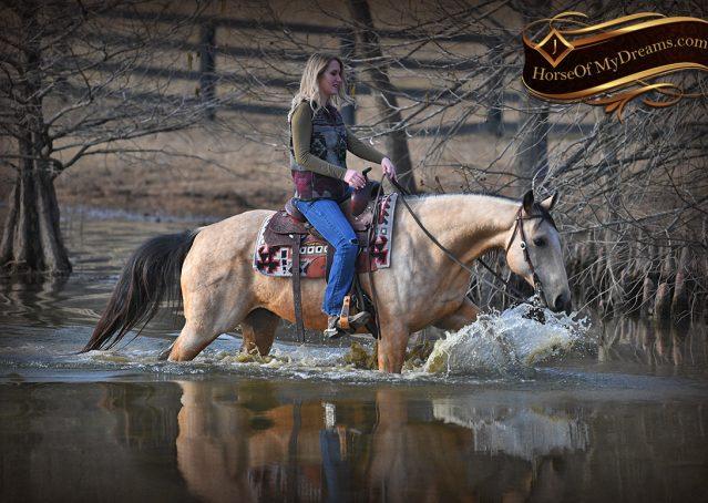 028-Oakley-Buckskin-Quarter-Horse-Gelding