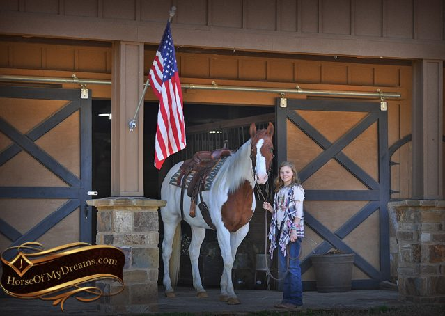 001-Major-Sorrel-Tobiano-APHA-Gelding-For-Sale