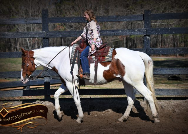 002-Major-Sorrel-Tobiano-APHA-Gelding-For-Sale