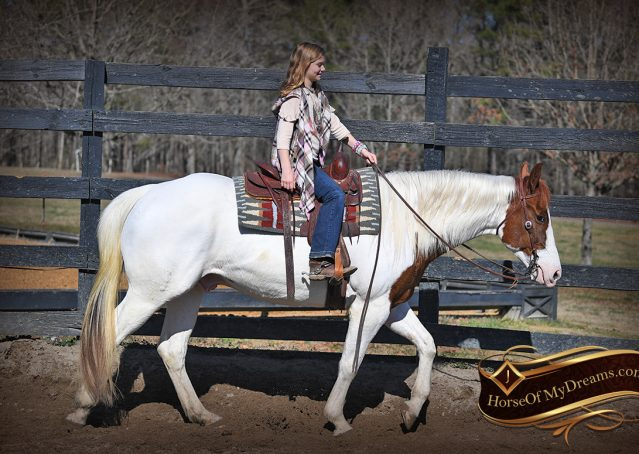 003-Major-Sorrel-Tobiano-APHA-Gelding-For-Sale