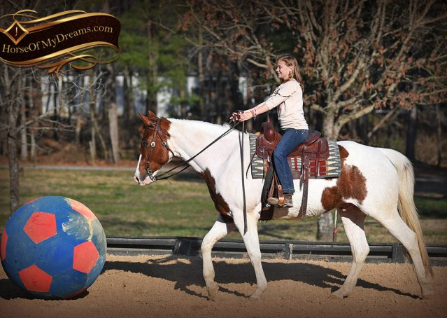 008-Major-Sorrel-Tobiano-APHA-Gelding-For-Sale