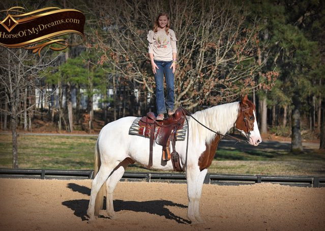 009-Major-Sorrel-Tobiano-APHA-Gelding-For-Sale