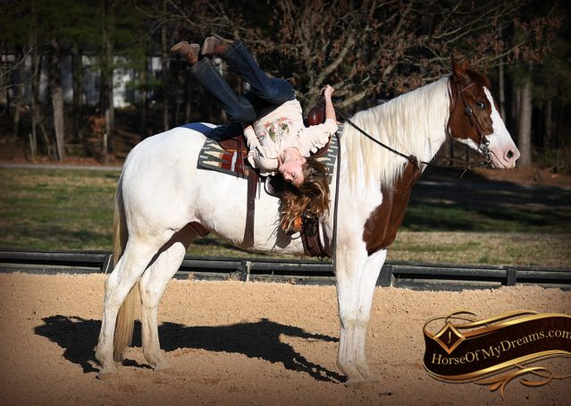 010-Major-Sorrel-Tobiano-APHA-Gelding-For-Sale