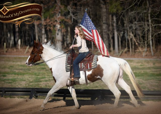 014-Major-Sorrel-Tobiano-APHA-Gelding-For-Sale