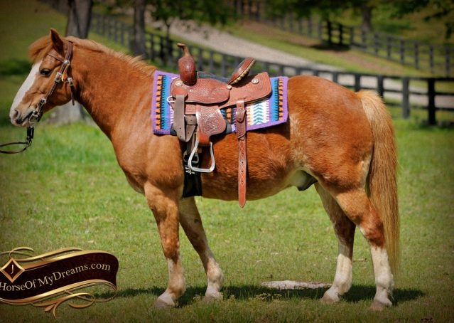 001-Splash-Sorrel-pony-gelding