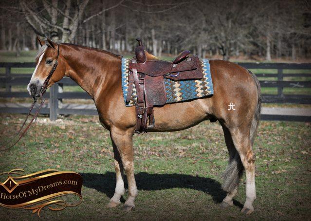 001-Wishin-Palomino-AQHA-NRHA-Quarter-Horse-For-Sale-Reiner-Reining