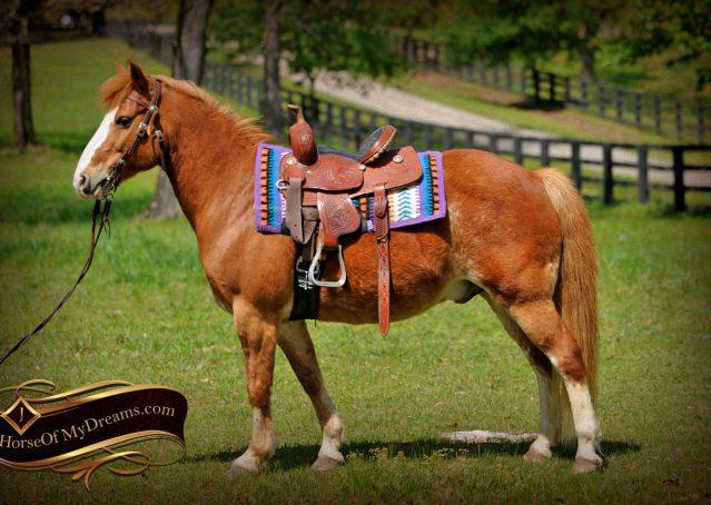 002-Splash-Sorrel-pony-gelding