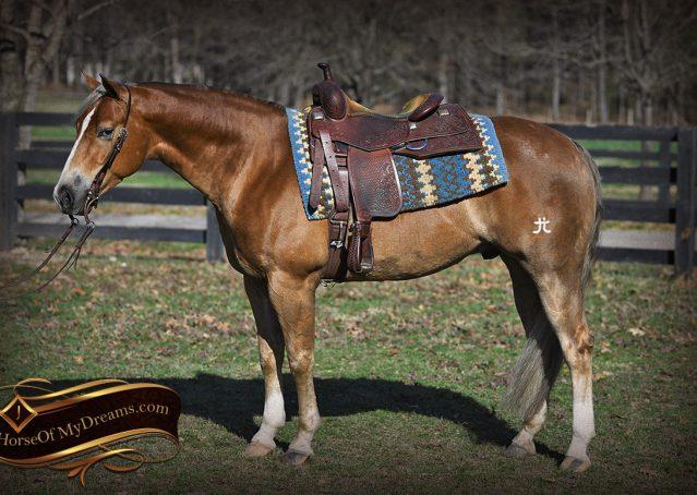 002-Wishin-Palomino-AQHA-NRHA-Quarter-Horse-For-Sale-Reiner-Reining