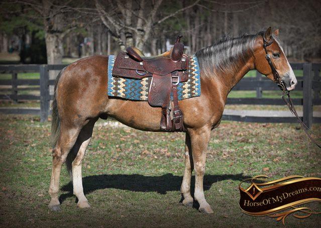 003-Wishin-Palomino-AQHA-NRHA-Quarter-Horse-For-Sale-Reiner-Reining