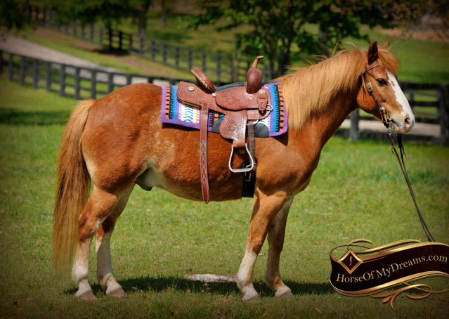 004-Splash-Sorrel-pony-gelding