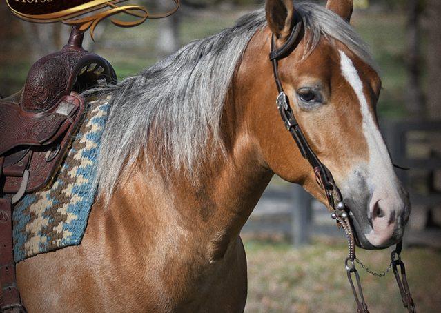 004-Wishin-Palomino-AQHA-NRHA-Quarter-Horse-For-Sale-Reiner-Reining