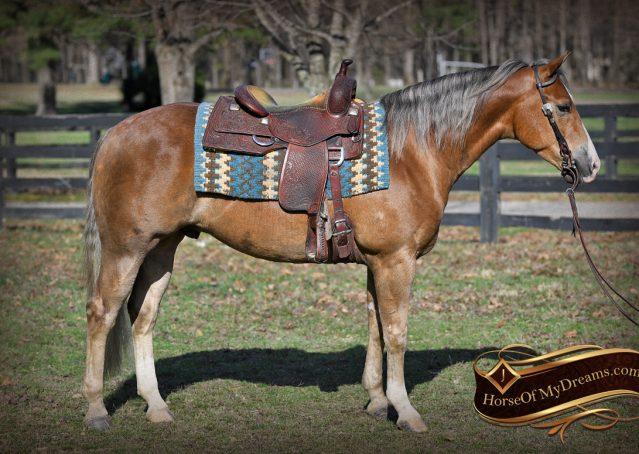 005-Wishin-Palomino-AQHA-NRHA-Quarter-Horse-For-Sale-Reiner-Reining