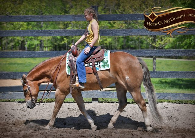 006-Wishin-Palomino-AQHA-NRHA-Quarter-Horse-For-Sale-Reiner-Reining