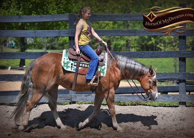007-Wishin-Palomino-AQHA-NRHA-Quarter-Horse-For-Sale-Reiner-Reining