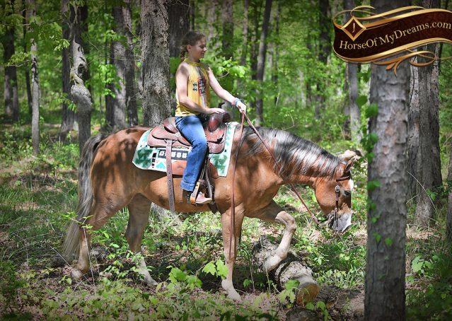 009-Wishin-Palomino-AQHA-NRHA-Quarter-Horse-For-Sale-Reiner-Reining