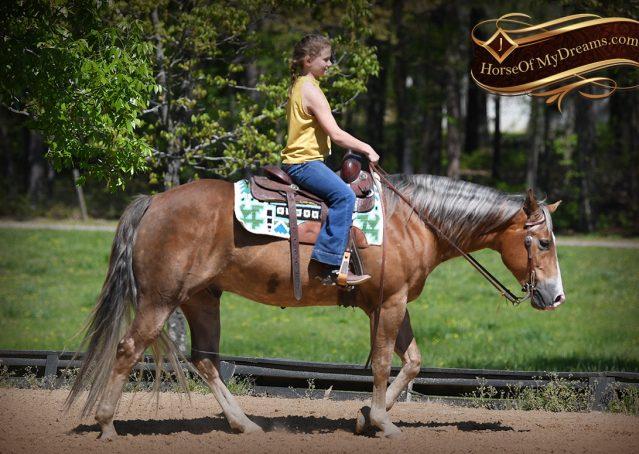 010-Wishin-Palomino-AQHA-NRHA-Quarter-Horse-For-Sale-Reiner-Reining