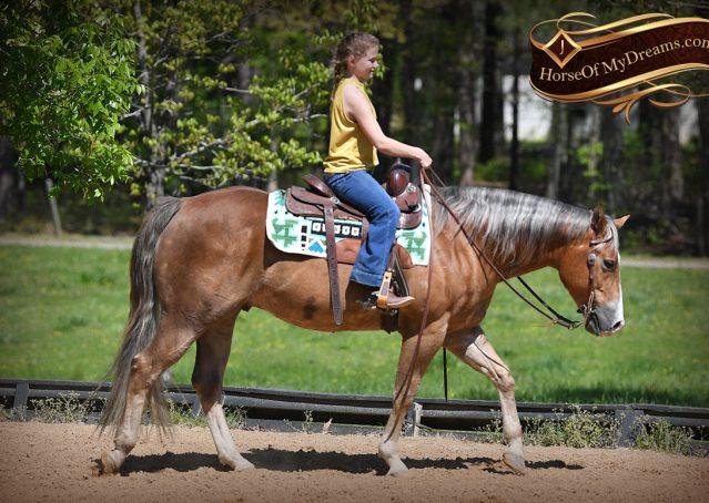 011-Wishin-Palomino-AQHA-NRHA-Quarter-Horse-For-Sale-Reiner-Reining