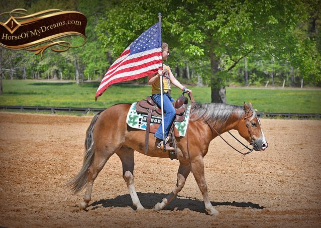 014-Wishin-Palomino-AQHA-NRHA-Quarter-Horse-For-Sale-Reiner-Reining