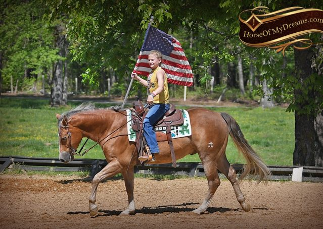 015-Wishin-Palomino-AQHA-NRHA-Quarter-Horse-For-Sale-Reiner-Reining