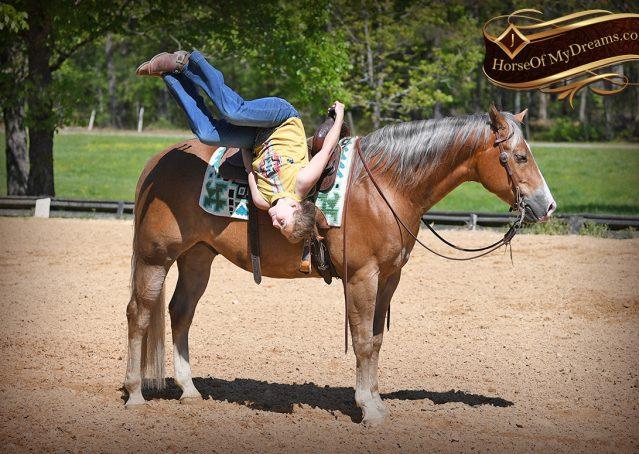 017-Wishin-Palomino-AQHA-NRHA-Quarter-Horse-For-Sale-Reiner-Reining
