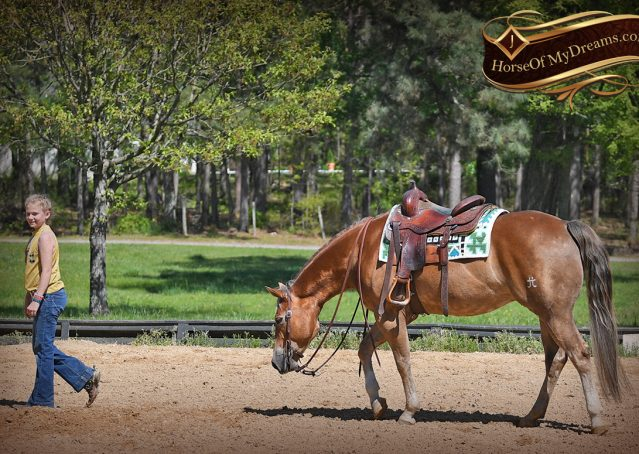 018-Wishin-Palomino-AQHA-NRHA-Quarter-Horse-For-Sale-Reiner-Reining