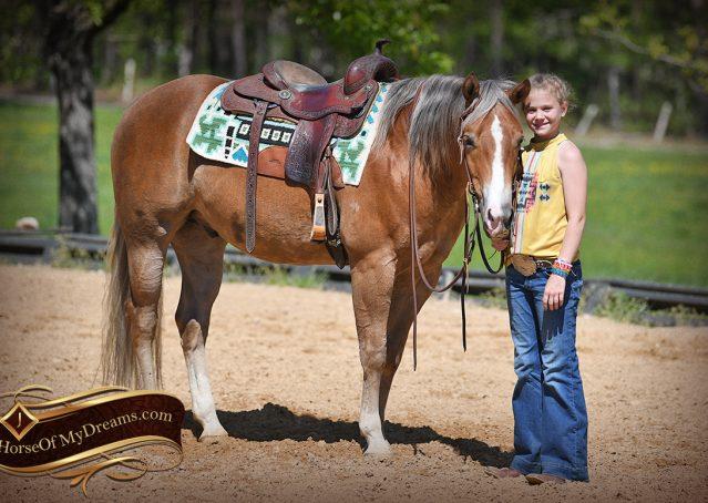 019-Wishin-Palomino-AQHA-NRHA-Quarter-Horse-For-Sale-Reiner-Reining