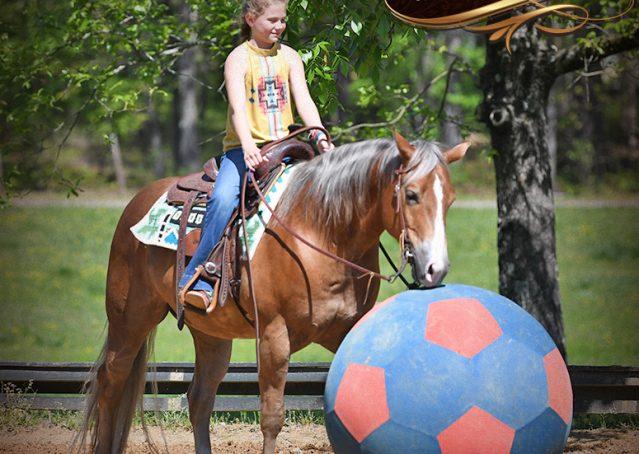 020-Wishin-Palomino-AQHA-NRHA-Quarter-Horse-For-Sale-Reiner-Reining