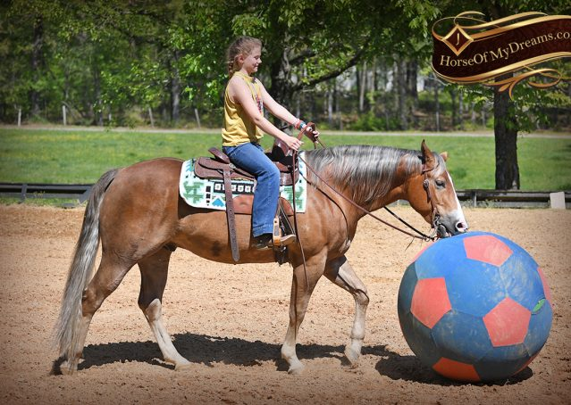 021-Wishin-Palomino-AQHA-NRHA-Quarter-Horse-For-Sale-Reiner-Reining