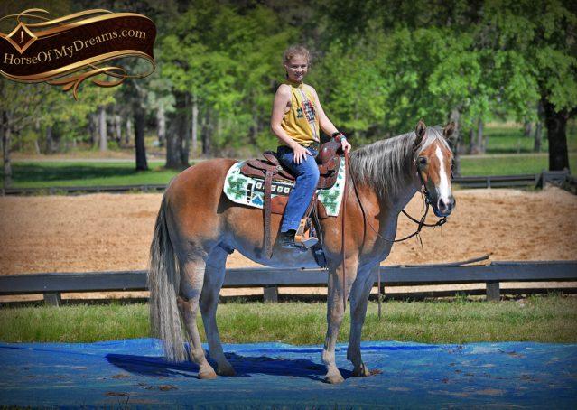 022-Wishin-Palomino-AQHA-NRHA-Quarter-Horse-For-Sale-Reiner-Reining