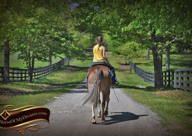 023-Wishin-Palomino-AQHA-NRHA-Quarter-Horse-For-Sale-Reiner-Reining
