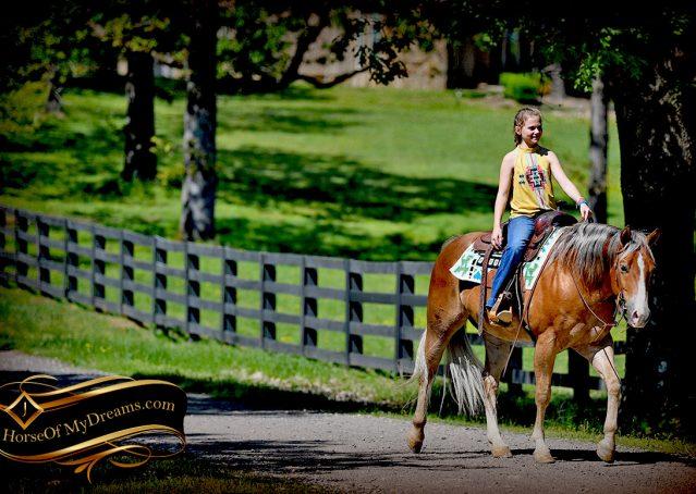 024-Wishin-Palomino-AQHA-NRHA-Quarter-Horse-For-Sale-Reiner-Reining