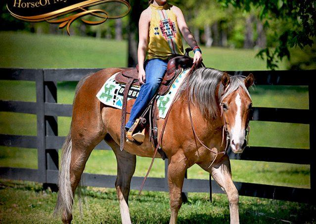 025-Wishin-Palomino-AQHA-NRHA-Quarter-Horse-For-Sale-Reiner-Reining
