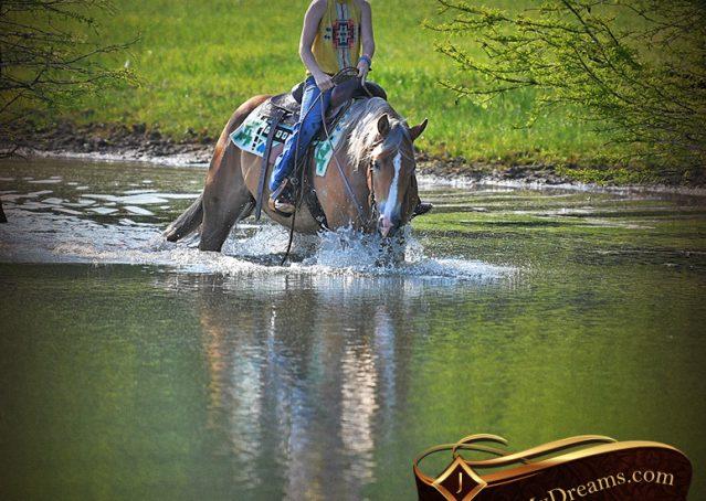 026-Wishin-Palomino-AQHA-NRHA-Quarter-Horse-For-Sale-Reiner-Reining