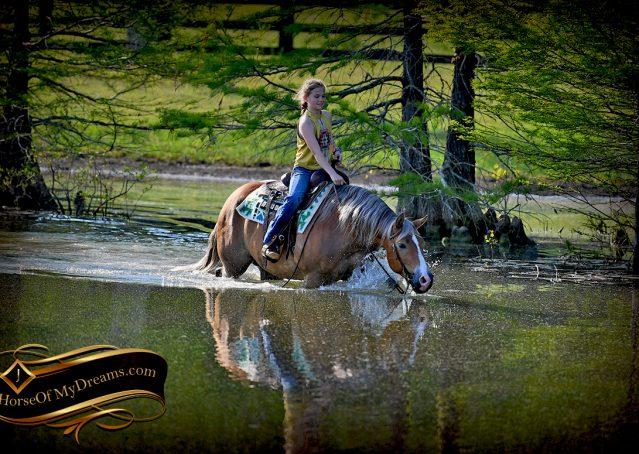 027-Wishin-Palomino-AQHA-NRHA-Quarter-Horse-For-Sale-Reiner-Reining