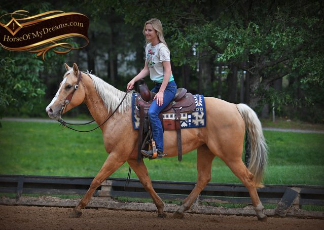 001-Montana-AQHA-Palomino-Mare-Voodoo-Dr-Reining-Reiner-for-sale-trails-parades