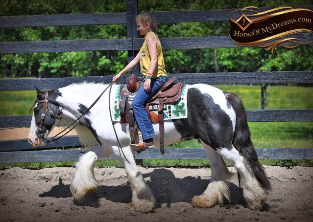 002-Charley-Gypsy-Vanner-Gelding-kids-beginner-gelding-for-sale-black-white-paint