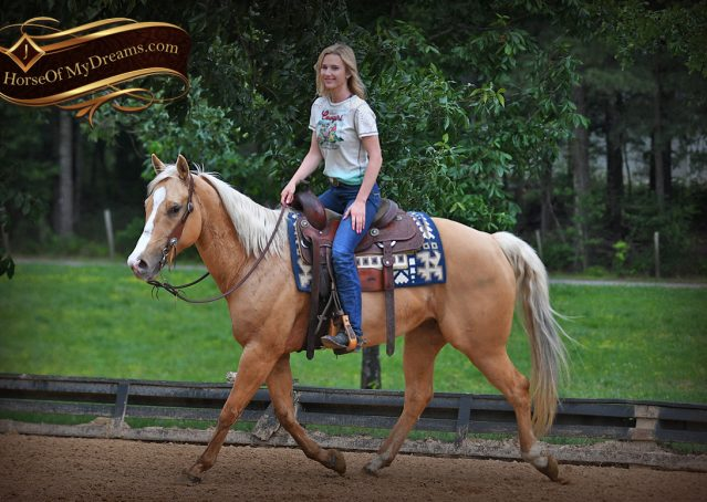 002-Montana-AQHA-Palomino-Mare-Voodoo-Dr-Reining-Reiner-for-sale-trails-parades