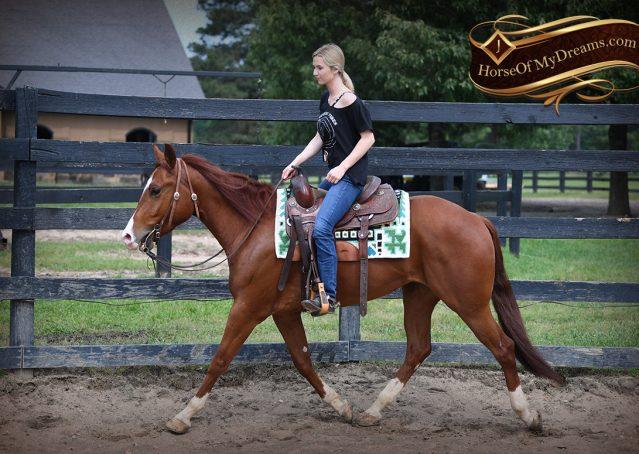 002-Trinity-AQHA-Sorrel-NRHA-Reiner-Reining-Ranch-Riding-Trail-Gelding-For-Sale