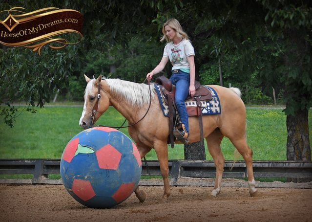 003-Montana-AQHA-Palomino-Mare-Voodoo-Dr-Reining-Reiner-for-sale-trails-parades