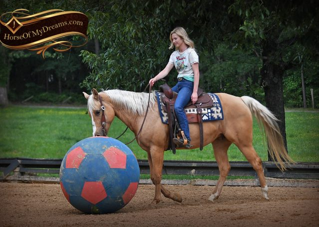 004-Montana-AQHA-Palomino-Mare-Voodoo-Dr-Reining-Reiner-for-sale-trails-parades