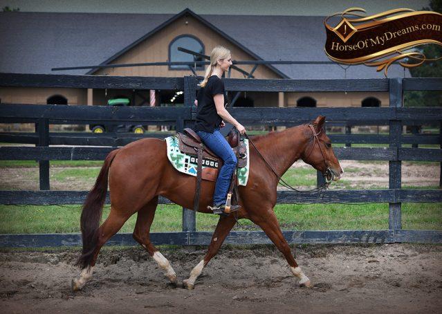 004-Trinity-AQHA-Sorrel-NRHA-Reiner-Reining-Ranch-Riding-Trail-Gelding-For-Sale