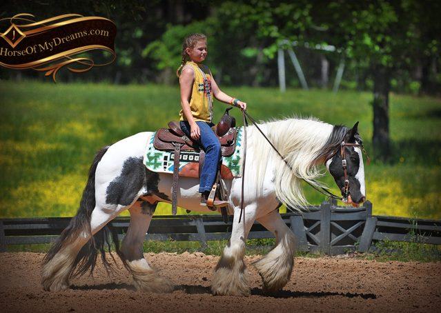 005-Charley-Gypsy-Vanner-Gelding-kids-beginner-gelding-for-sale-black-white-paint