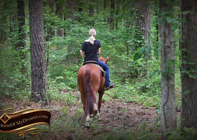 005-Trinity-AQHA-Sorrel-NRHA-Reiner-Reining-Ranch-Riding-Trail-Gelding-For-Sale