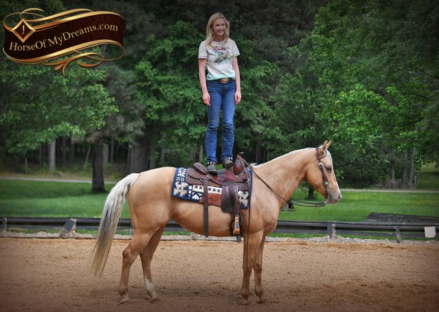 007-Montana-AQHA-Palomino-Mare-Voodoo-Dr-Reining-Reiner-for-sale-trails-parades