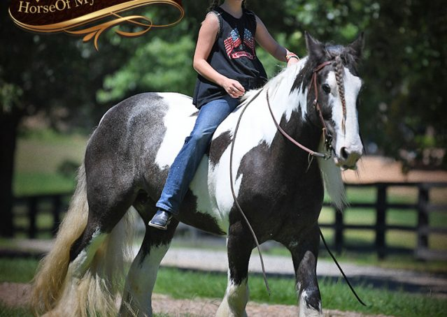 007-Swagger-Black-Tobiano-Gypsy-Vanner-Gelding-For-Sale