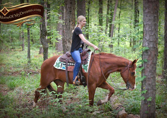 007-Trinity-AQHA-Sorrel-NRHA-Reiner-Reining-Ranch-Riding-Trail-Gelding-For-Sale