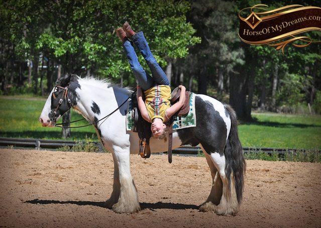 008-Charley-Gypsy-Vanner-Gelding-kids-beginner-gelding-for-sale-black-white-paint