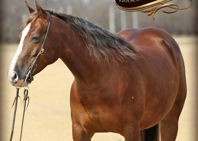 008-Sangria-AQHA-NRHA-Chesnut-Silver-Mane-Reiner-Reining-Mare-For-Sale