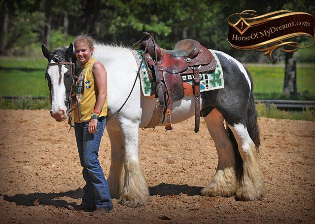 009-Charley-Gypsy-Vanner-Gelding-kids-beginner-gelding-for-sale-black-white-paint