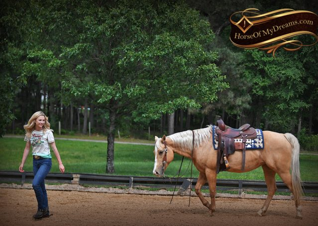 009-Montana-AQHA-Palomino-Mare-Voodoo-Dr-Reining-Reiner-for-sale-trails-parades